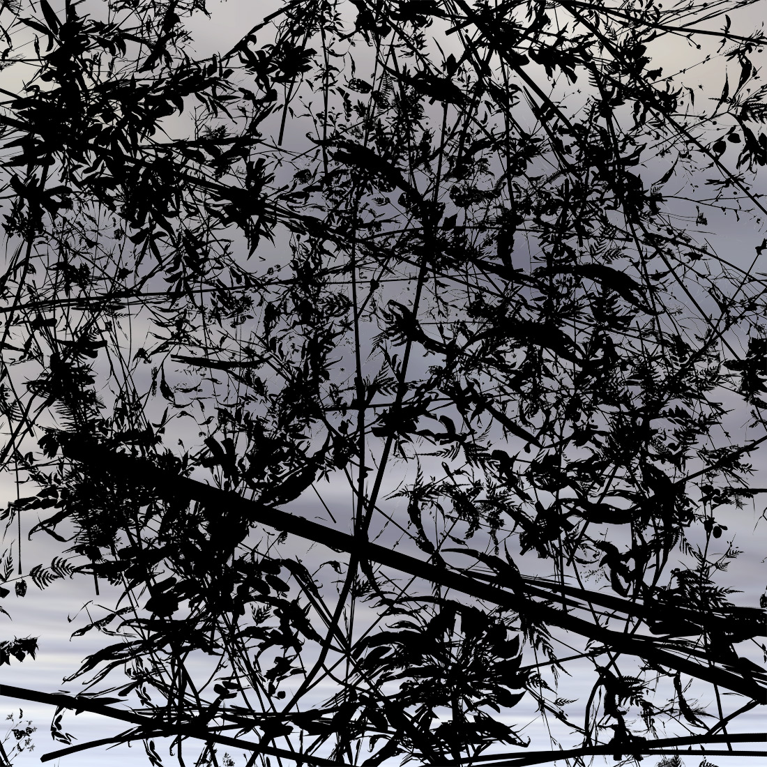 Floating Weeds 6, 2008, C-Print, 69 x 69 cm