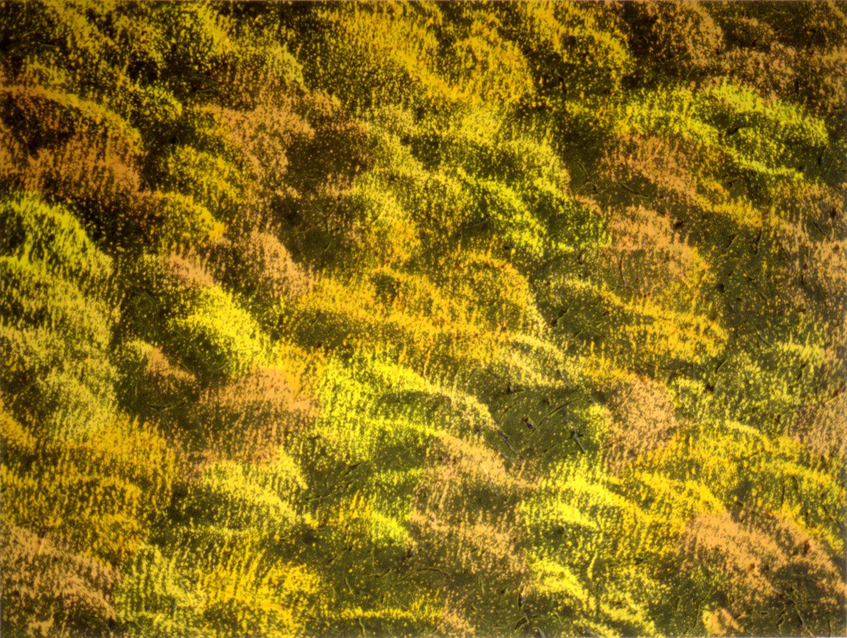 Broussailles, 1993, acrylique sur toile, 110 x 145 cm