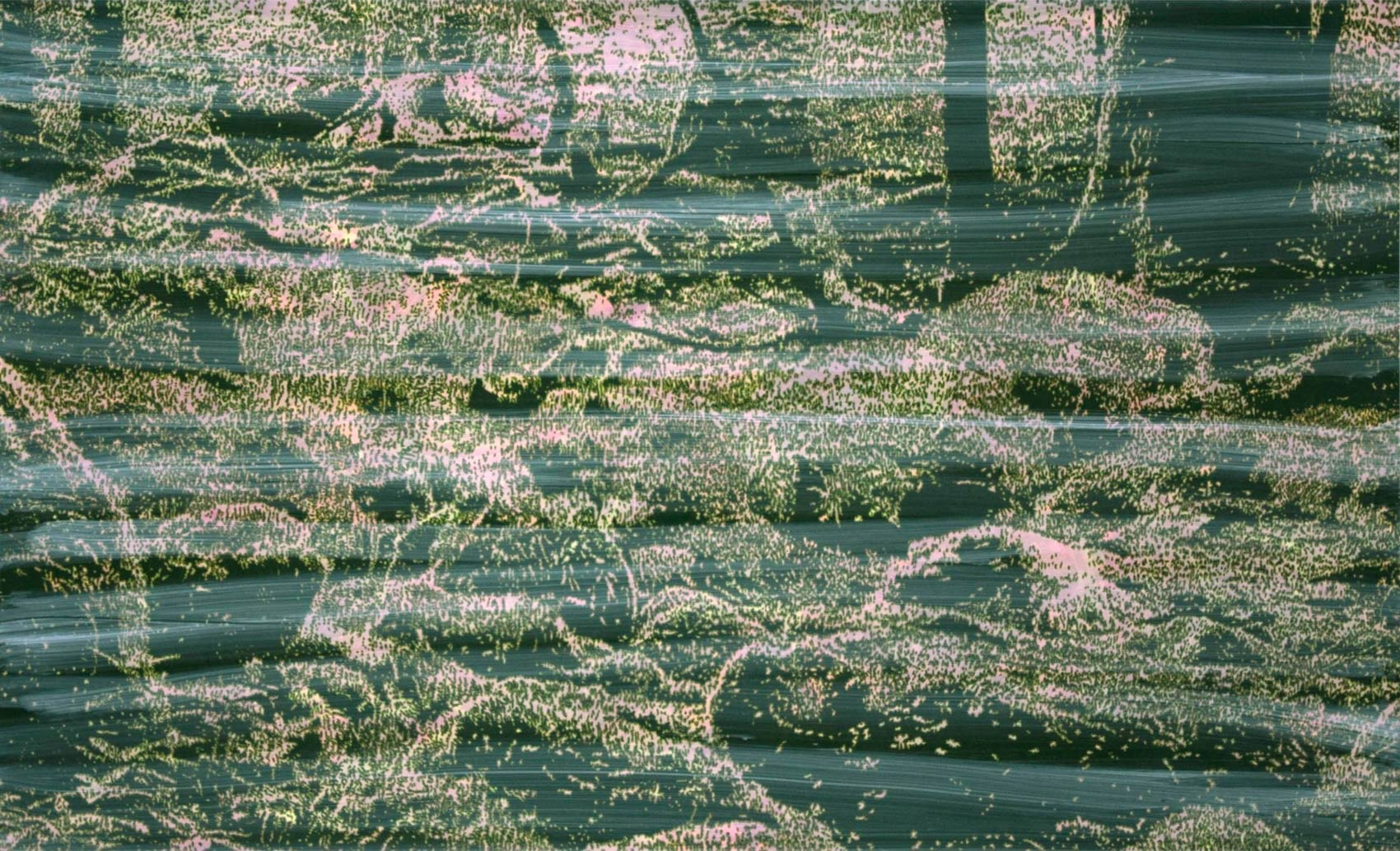 Primary Forest 9, 2014, peinture alkyde sur Dibond, 125 x 205 cm